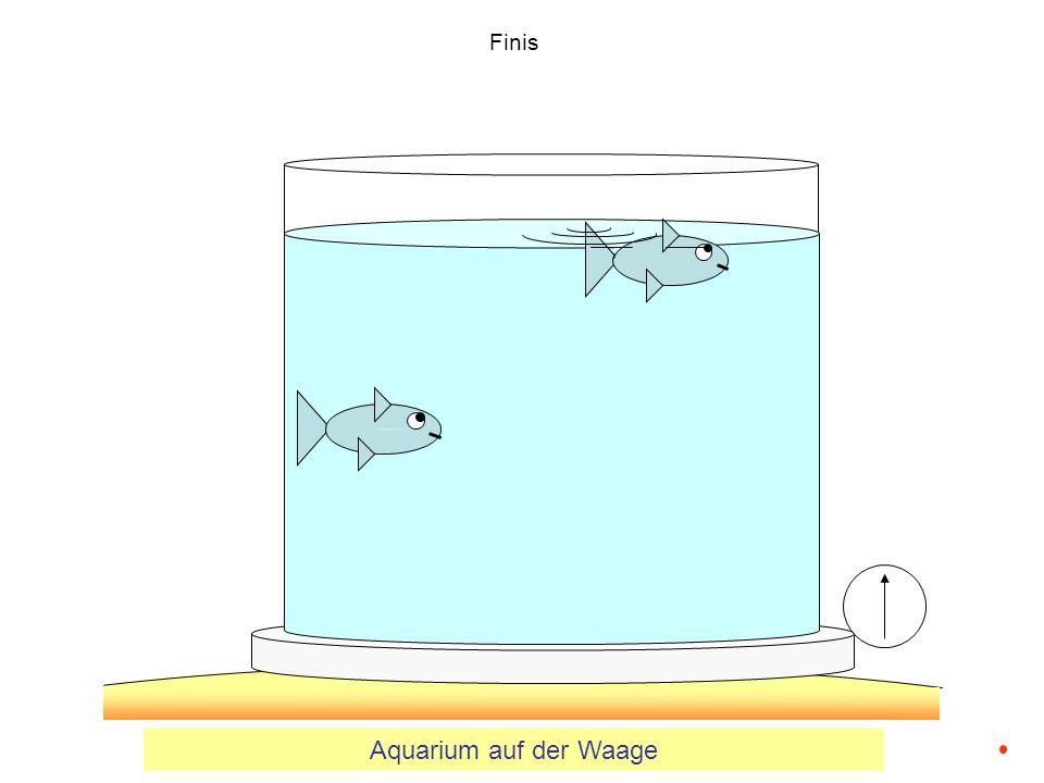 Finis Aquarium auf der Waage