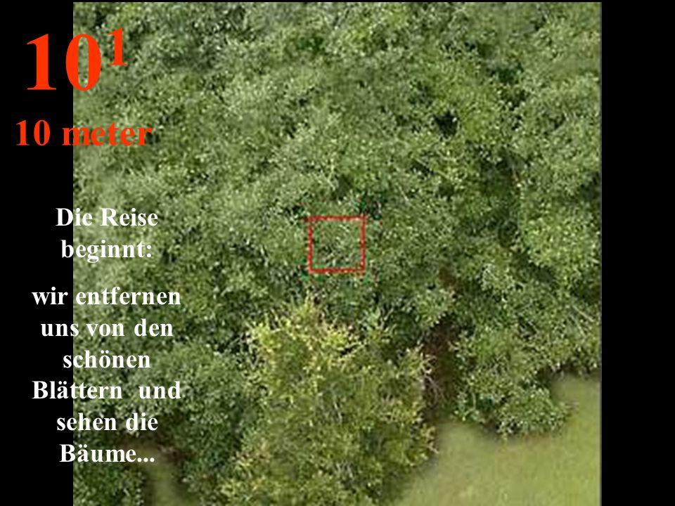 Die Reise beginnt: wir entfernen uns von den schönen Blättern und sehen die Bäume... 10 1 10 meter