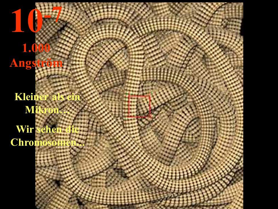 Kleiner als ein Mikron… Wir sehen die Chromosomen... 10 -7 1.000 Angström