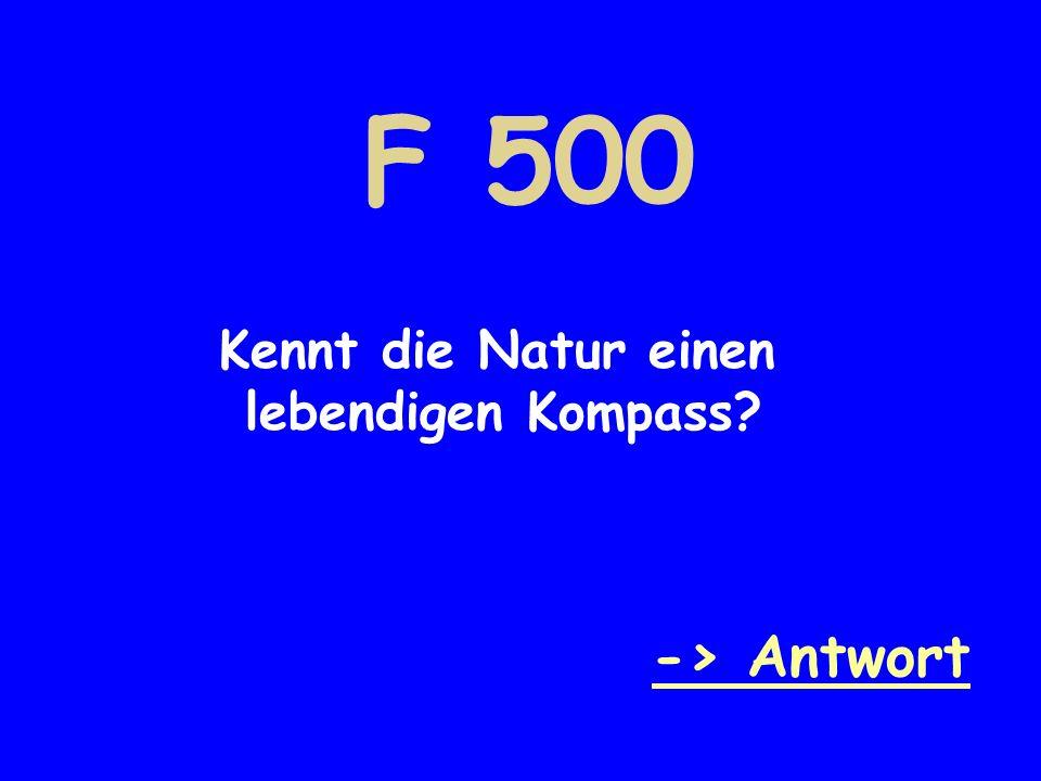 F 500 Kennt die Natur einen lebendigen Kompass? -> Antwort