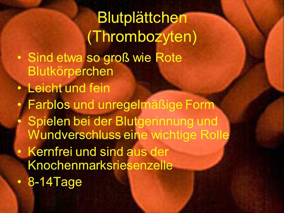Blutplättchen (Thrombozyten) Sind etwa so groß wie Rote Blutkörperchen Leicht und fein Farblos und unregelmäßige Form Spielen bei der Blutgerinnung un