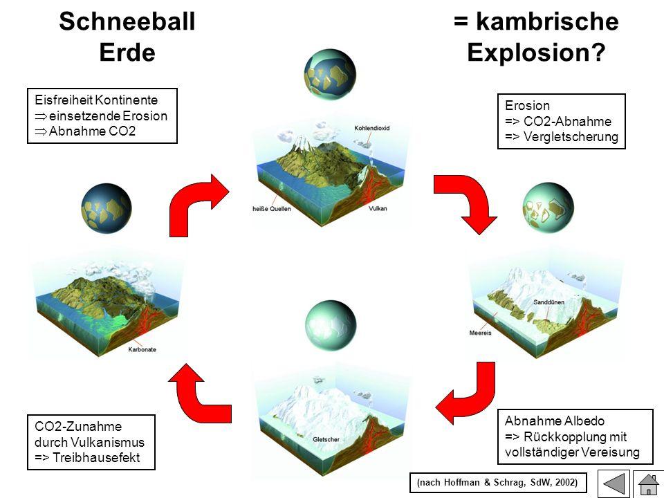 Eisfreiheit Kontinente einsetzende Erosion Abnahme CO2 Schneeball Erde = kambrische Explosion? Erosion => CO2-Abnahme => Vergletscherung Abnahme Albed