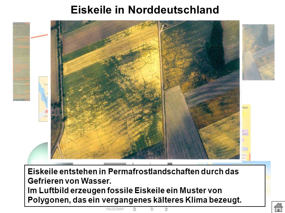 Eiskeile in Norddeutschland Eiskeile entstehen in Permafrostlandschaften durch das Gefrieren von Wasser. Im Luftbild erzeugen fossile Eiskeile ein Mus
