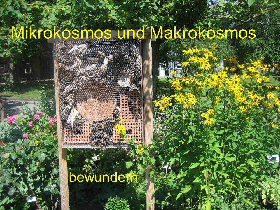 Mikrokosmos und Makrokosmos bewundern