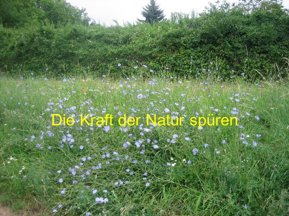 Die Kraft der Natur spüren