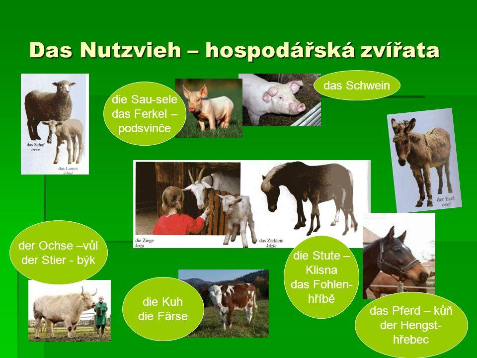 Das Nutzvieh – hospodářská zvířata das Schwein die Sau-sele das Ferkel – podsvinče der Ochse –vůl der Stier - býk die Kuh die Färse die Stute – Klisna