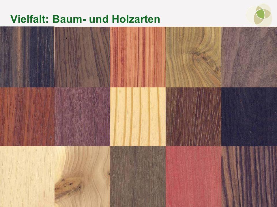 © FH-Prof. Dr. Bernhard Zimmer – Regensburg, 15.10.2011 Vielfalt: Baum- und Holzarten