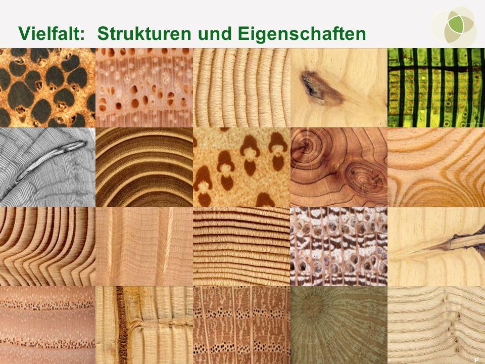© FH-Prof. Dr. Bernhard Zimmer – Regensburg, 15.10.2011 Vielfalt: Strukturen und Eigenschaften P h o t o s : B. Z i m m e r