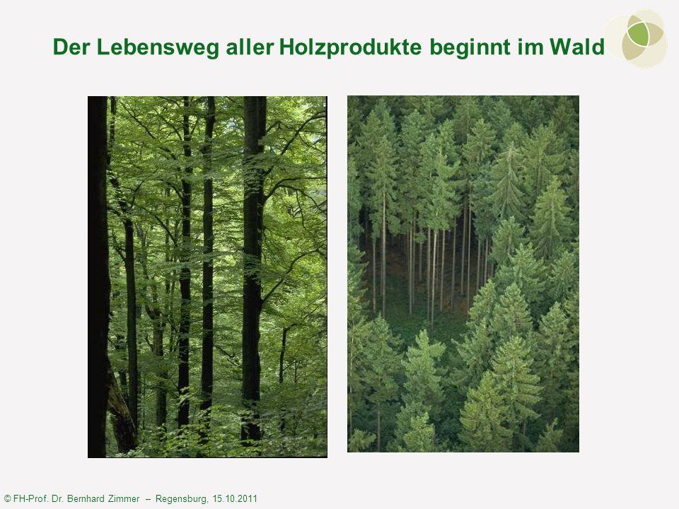 © FH-Prof. Dr. Bernhard Zimmer – Regensburg, 15.10.2011 Der Lebensweg aller Holzprodukte beginnt im Wald