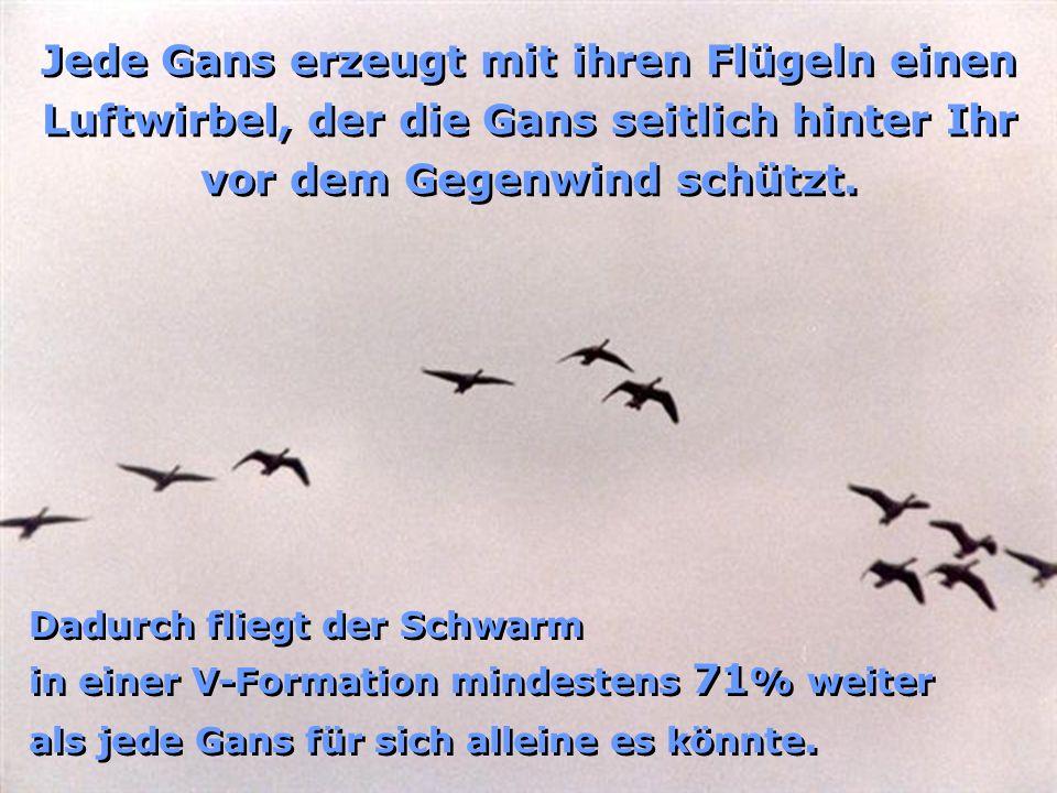Hast Du Dich schon einmal gefragt, warum Gänse auf ihren langen Reisen immer in einer V-Formation fliegen? Wie so oft können wir auch hier von Mutter
