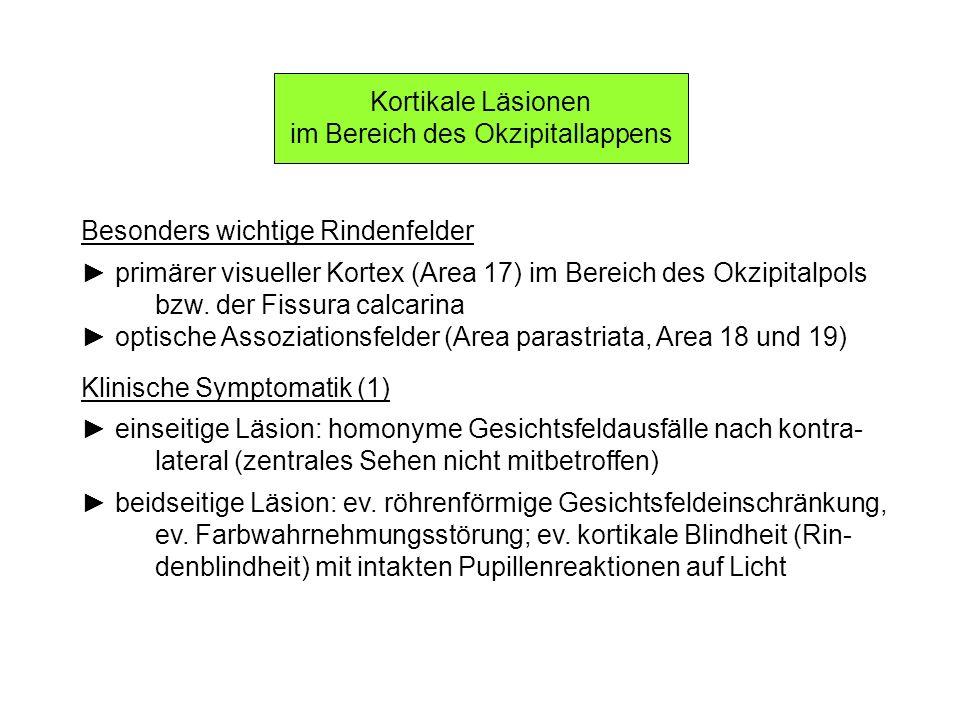 Kortikale Läsionen im Bereich des Okzipitallappens Besonders wichtige Rindenfelder primärer visueller Kortex (Area 17) im Bereich des Okzipitalpols bz
