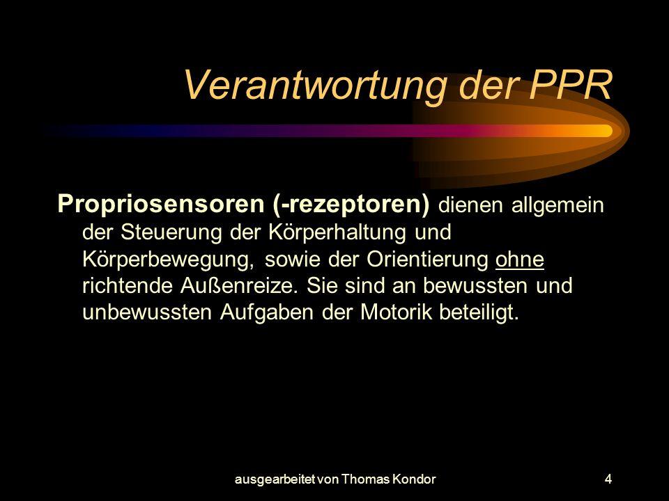 ausgearbeitet von Thomas Kondor4 Verantwortung der PPR Propriosensoren (-rezeptoren) dienen allgemein der Steuerung der Körperhaltung und Körperbewegu