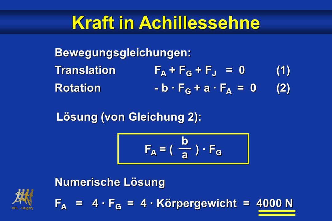 Bewegungsgleichungen: TranslationF A + F G + F J = 0(1) Rotation- b · F G + a · F A = 0(2) F A = ( ) · F G b –– a Kraft in Achillessehne Lösung (von G