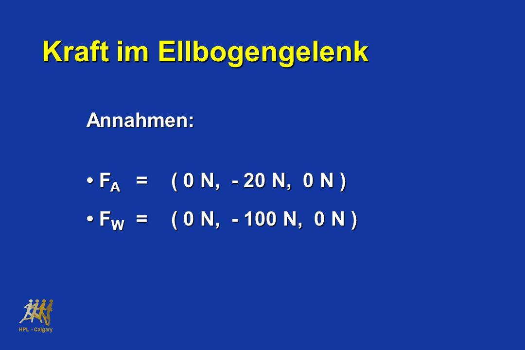 Annahmen: F A =( 0 N, - 20 N, 0 N ) F A =( 0 N, - 20 N, 0 N ) F W =( 0 N, - 100 N, 0 N ) F W =( 0 N, - 100 N, 0 N ) Kraft im Ellbogengelenk