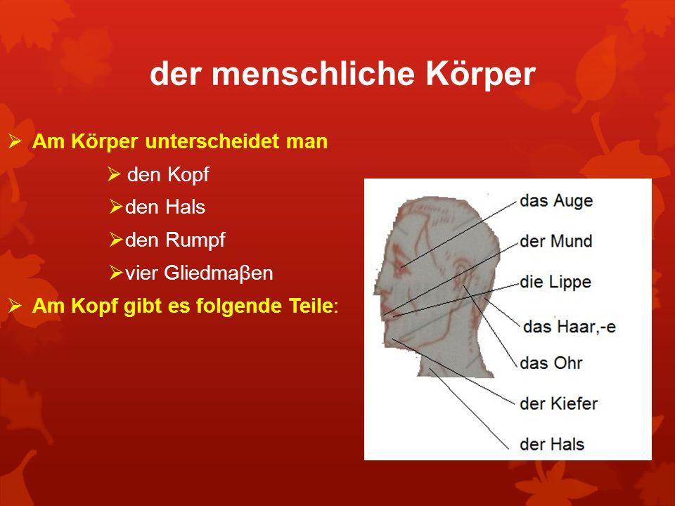 der menschliche Körper Am Körper unterscheidet man den Kopf den Hals den Rumpf vier Gliedmaβen Am Kopf gibt es folgende Teile: