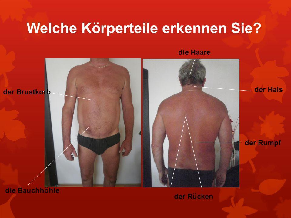 Welche Körperteile erkennen Sie? der Brustkorb die Bauchhöhle die Haare der Hals der Rumpf der Rücken