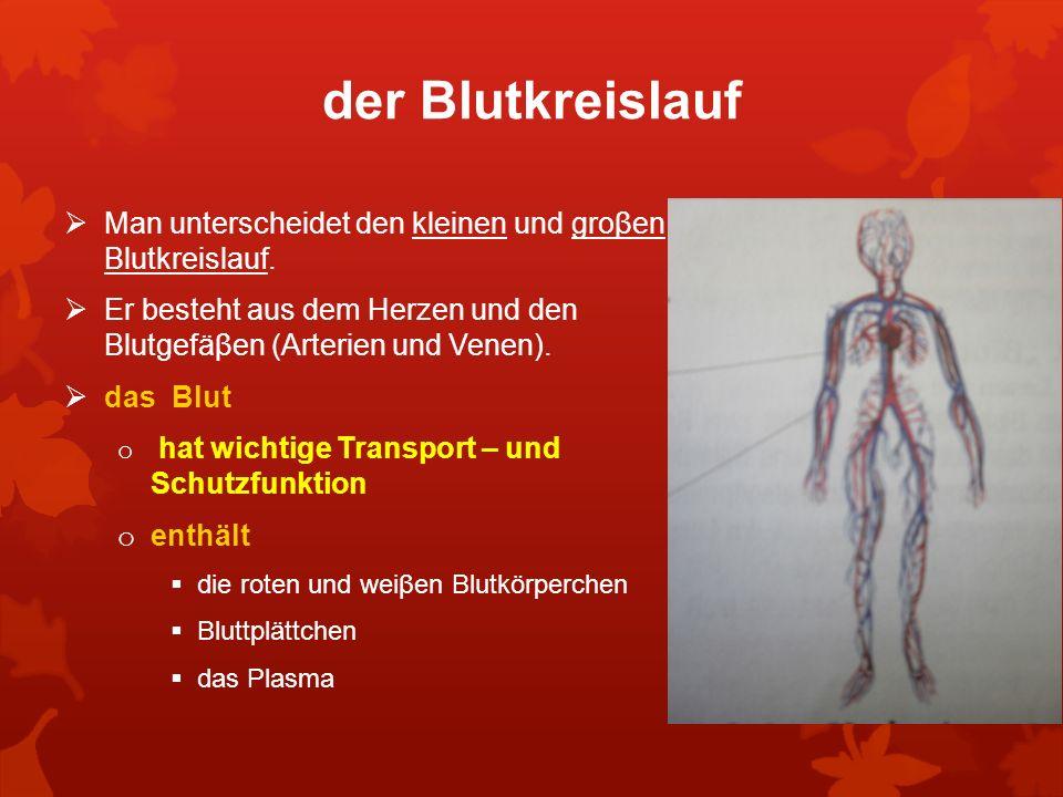 der Blutkreislauf Man unterscheidet den kleinen und groβen Blutkreislauf. Er besteht aus dem Herzen und den Blutgefäβen (Arterien und Venen). das Blut