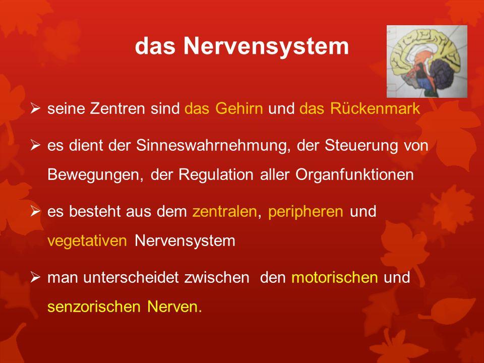 das Nervensystem seine Zentren sind das Gehirn und das Rückenmark es dient der Sinneswahrnehmung, der Steuerung von Bewegungen, der Regulation aller O