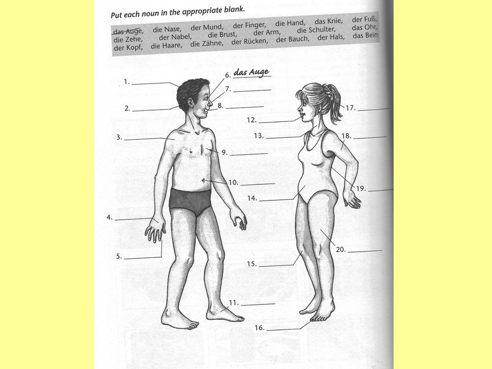 der Kopf -e das Ohr -en das Auge -n die Nase –n der Zahn -e der Hals -e der Bauch -e der Arm -e das Bein -e das Köpfchen das/die Öhrchen das/die Äuglein das Näschen das/die Zähnchen das Hälslein das Bäuchlein das Ärmchen das Beinchen