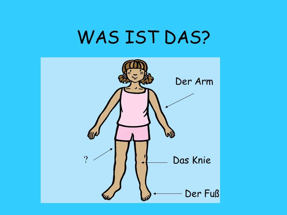 WAS IST DAS? Der Arm Der Fuß ? Das Knie