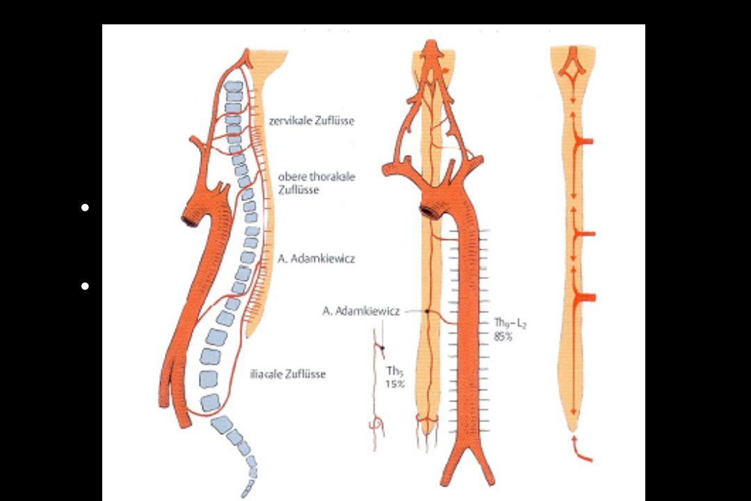 Patientenlagerung Extremität anheben Keilkissen, Kopf-tief-Lage 5-8° Gas Trapping: Verz.