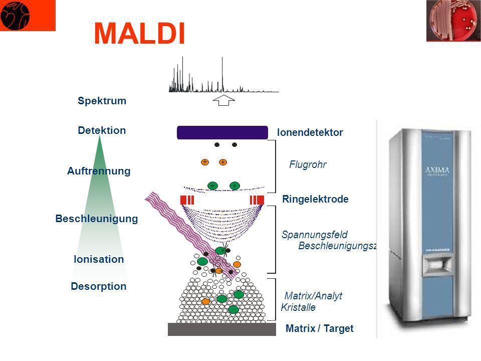 Desorption Ionisation Beschleunigung Auftrennung Detektion Ionendetektor + + + + ++ Matrix / Target Matrix/Analyt Kristalle Spannungsfeld Beschleunigu