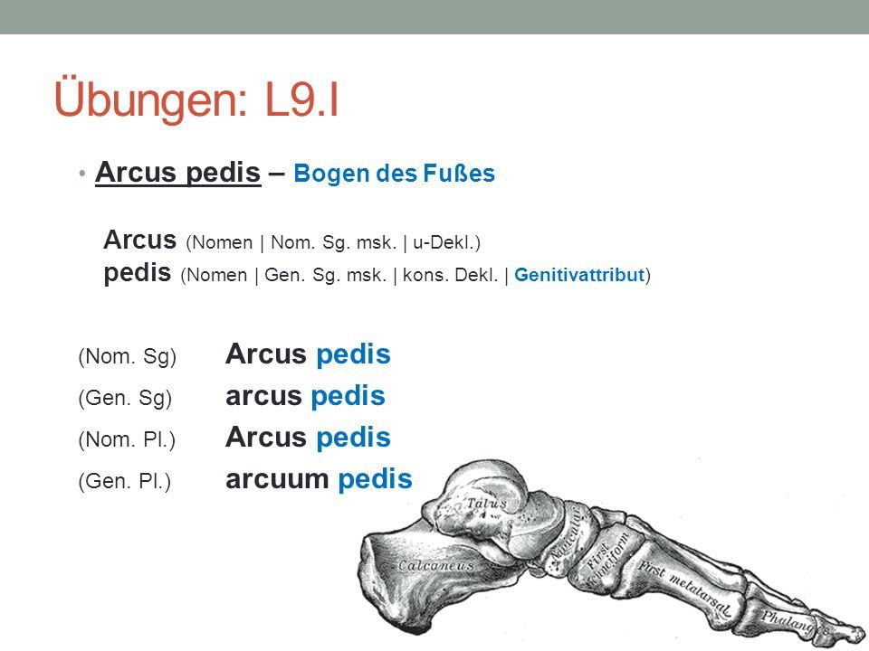 Übungen: L9.I Arcus pedis – Bogen des Fußes Arcus (Nomen | Nom. Sg. msk. | u-Dekl.) pedis (Nomen | Gen. Sg. msk. | kons. Dekl. | Genitivattribut) (Nom