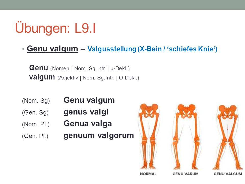 Übungen: L9.I Genu valgum – Valgusstellung (X-Bein / schiefes Knie) Genu (Nomen | Nom.