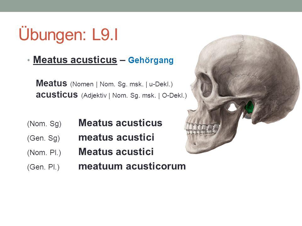 Übungen: L9.I Meatus acusticus – Gehörgang Meatus (Nomen | Nom. Sg. msk. | u-Dekl.) acusticus (Adjektiv | Nom. Sg. msk. | O-Dekl.) (Nom. Sg) Meatus ac