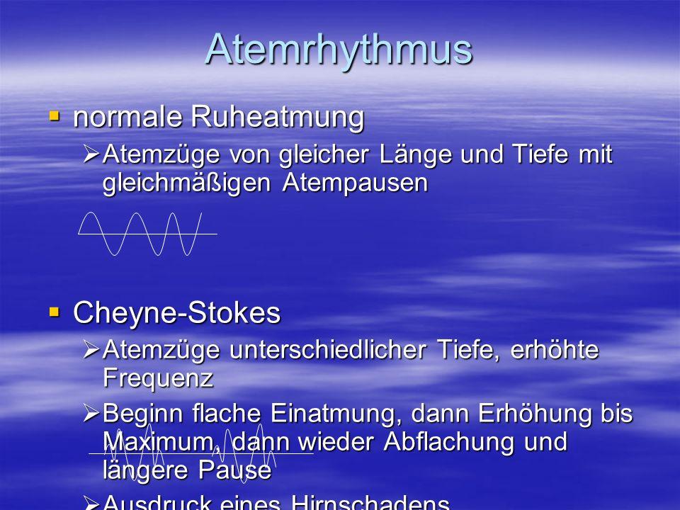 Atemrhythmus normale Ruheatmung normale Ruheatmung Atemzüge von gleicher Länge und Tiefe mit gleichmäßigen Atempausen Atemzüge von gleicher Länge und