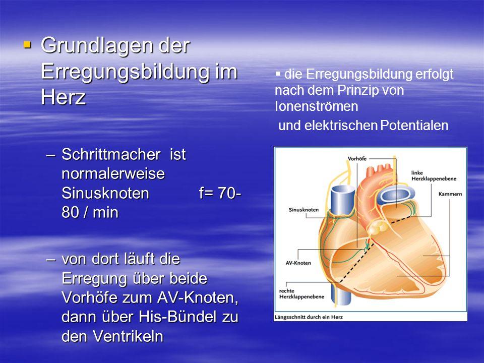 Grundlagen der Erregungsbildung im Herz Grundlagen der Erregungsbildung im Herz –Schrittmacher ist normalerweise Sinusknoten f= 70- 80 / min –von dort