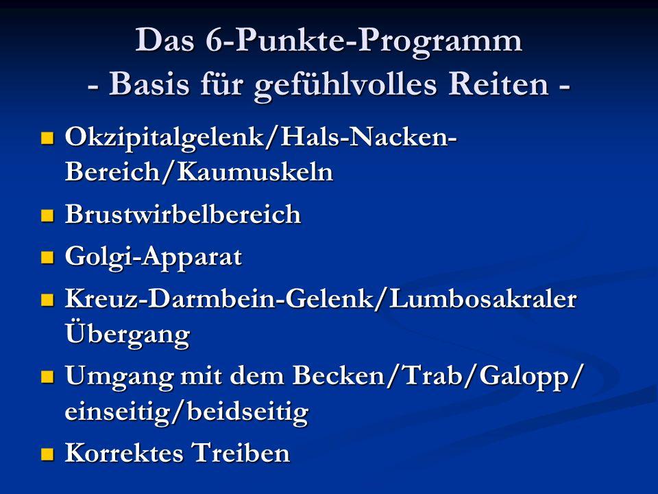 Das 6-Punkte-Programm - Basis für gefühlvolles Reiten - Okzipitalgelenk/Hals-Nacken- Bereich/Kaumuskeln Okzipitalgelenk/Hals-Nacken- Bereich/Kaumuskel
