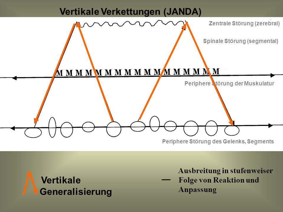 Vertikale Generalisierung Zentrale Störung (zerebral) Spinale Störung (segmental) Periphere Störung der Muskulatur Periphere Störung des Gelenks, Segm