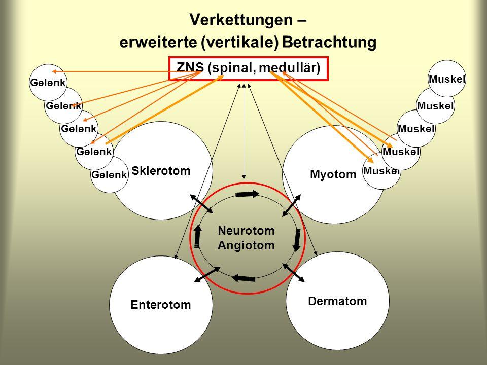 Sklerotom Enterotom Dermatom Myotom Neurotom Angiotom Verkettungen – erweiterte (vertikale) Betrachtung Muskel Gelenk ZNS (spinal, medullär)