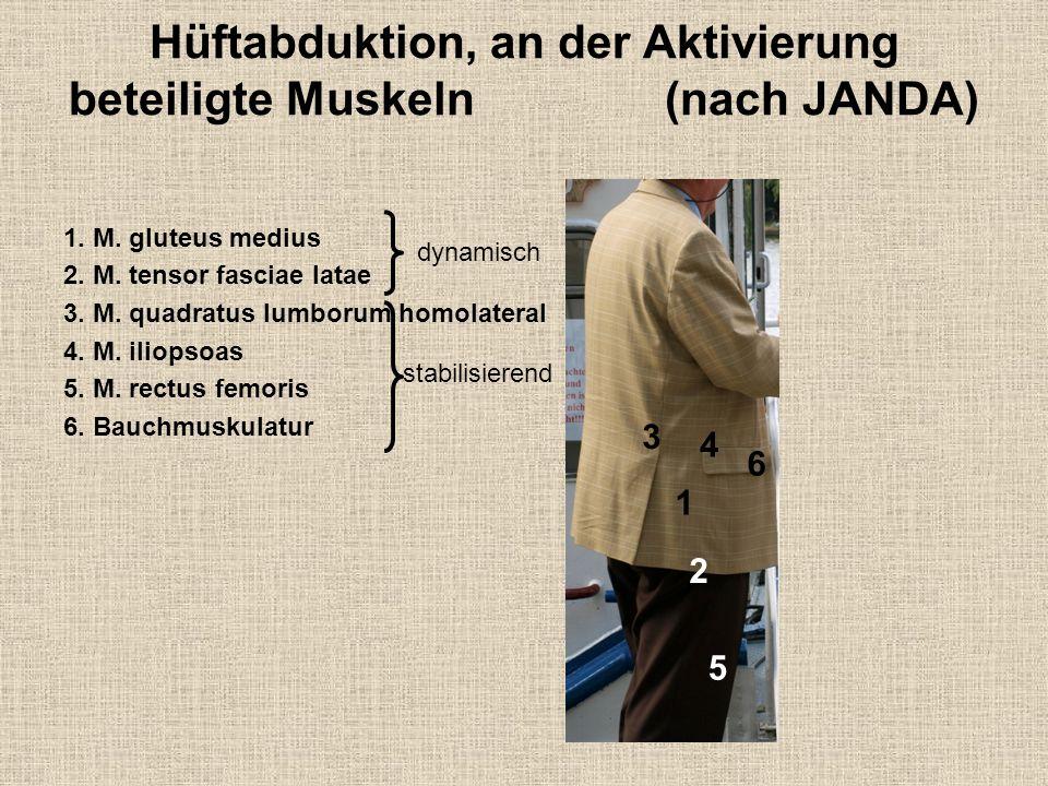 Hüftabduktion, an der Aktivierung beteiligte Muskeln (nach JANDA) 1. M. gluteus medius 2. M. tensor fasciae latae 3. M. quadratus lumborum homolateral