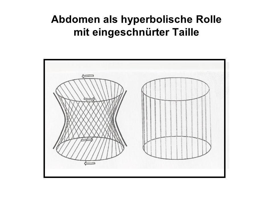 Abdomen als hyperbolische Rolle mit eingeschnürter Taille