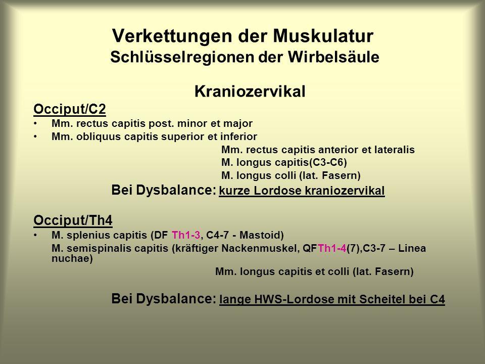Verkettungen der Muskulatur Schlüsselregionen der Wirbelsäule Kraniozervikal Occiput/C2 Mm. rectus capitis post. minor et major Mm. obliquus capitis s