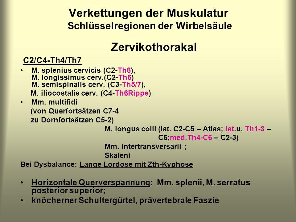 Verkettungen der Muskulatur Schlüsselregionen der Wirbelsäule Zervikothorakal C2/C4-Th4/Th7 M. splenius cervicis (C2-Th6), M. longissimus cerv.(C2-Th6