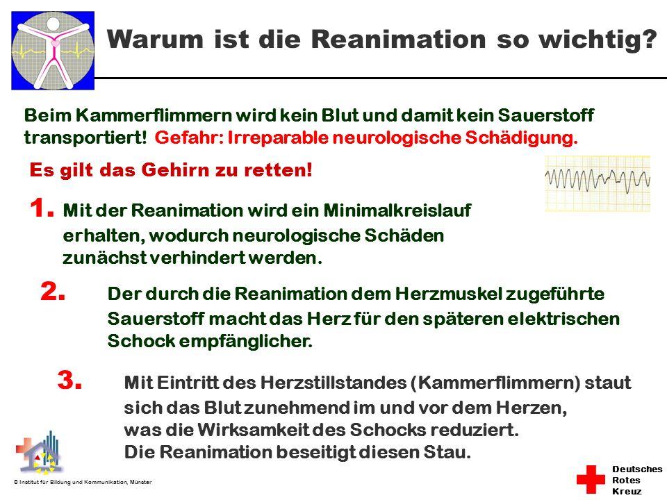 Deutsches Rotes Kreuz © Institut für Bildung und Kommunikation, Münster Warum ist die Reanimation so wichtig? Beim Kammerflimmern wird kein Blut und d