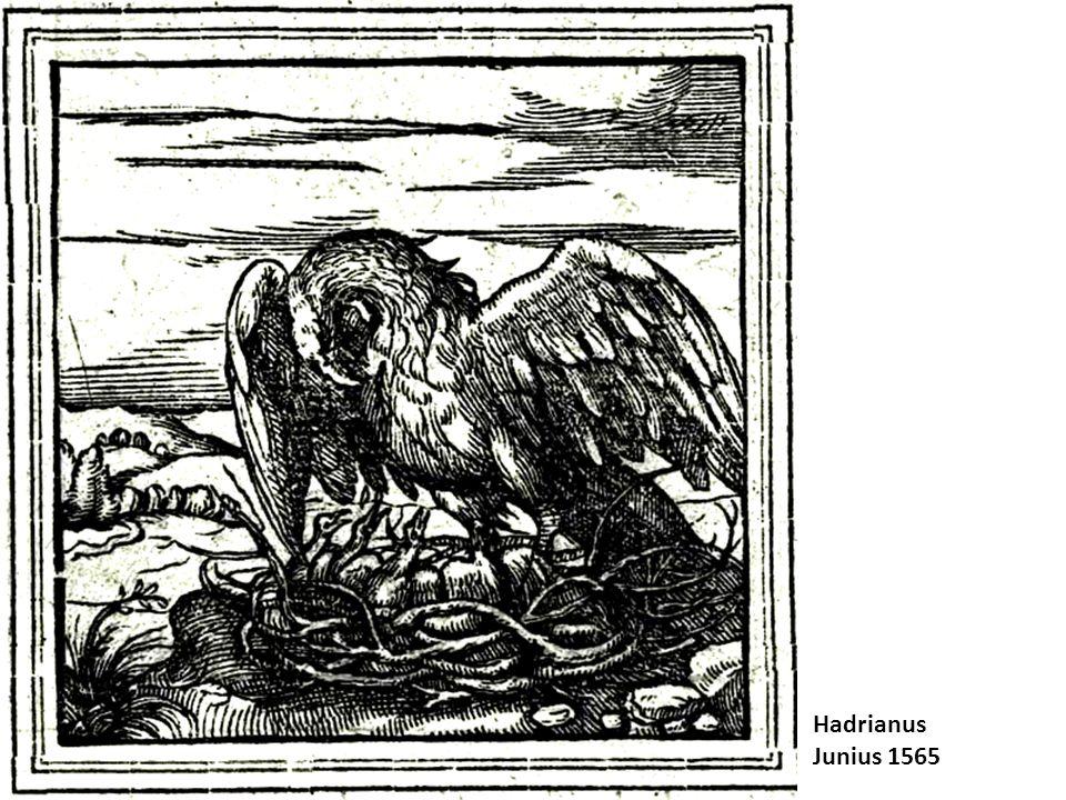 Hadrianus Junius 1565