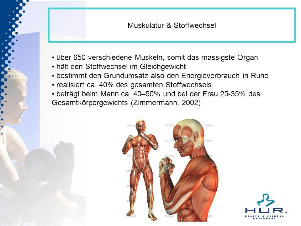 Muskulatur & Stoffwechsel über 650 verschiedene Muskeln, somit das massigste Organ hält den Stoffwechsel im Gleichgewicht bestimmt den Grundumsatz als