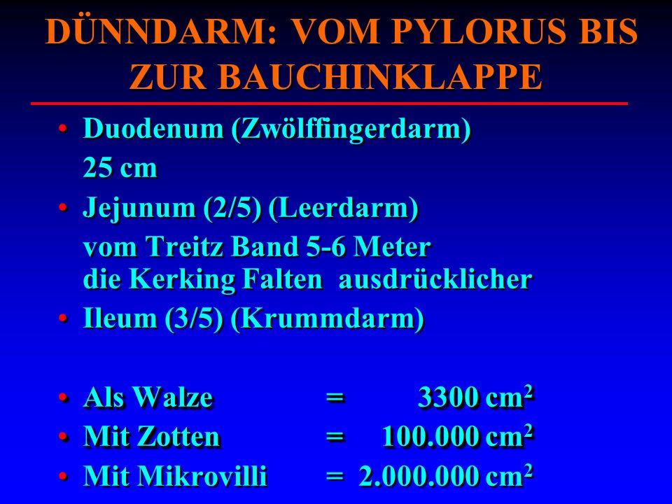 DÜNNDARM: VOM PYLORUS BIS ZUR BAUCHINKLAPPE Duodenum (Zwölffingerdarm) 25 cm Jejunum (2/5) (Leerdarm) vom Treitz Band 5-6 Meter die Kerking Falten aus