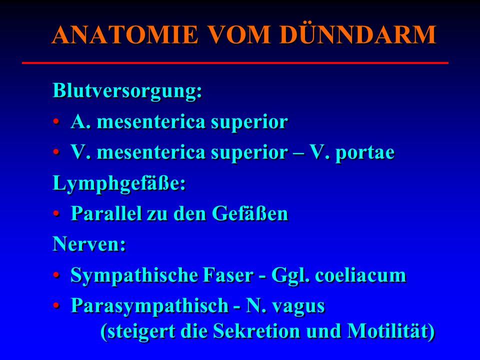 Blutversorgung: A. mesenterica superior V. mesenterica superior – V. portae Lymphgefäße: Parallel zu den Gefäßen Nerven: Sympathische Faser - Ggl. coe