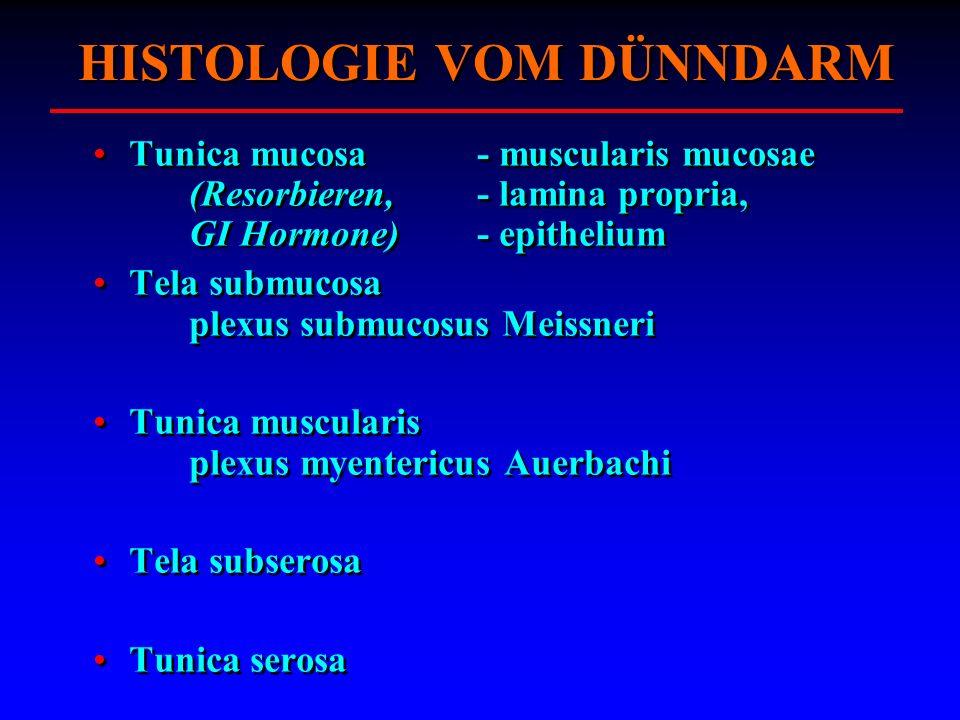 HISTOLOGIE VOM DÜNNDARM Tunica mucosa - muscularis mucosae (Resorbieren, - lamina propria, GI Hormone) - epithelium Tela submucosa plexus submucosus M
