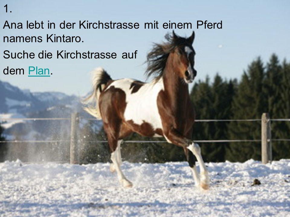 1.Ana lebt in der Kirchstrasse mit einem Pferd namens Kintaro.