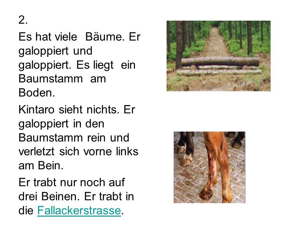 1. Ana lebt in der Kirchstrasse mit einem Pferd namens Kintaro. Suche die Kirchstrasse auf dem Plan.Plan