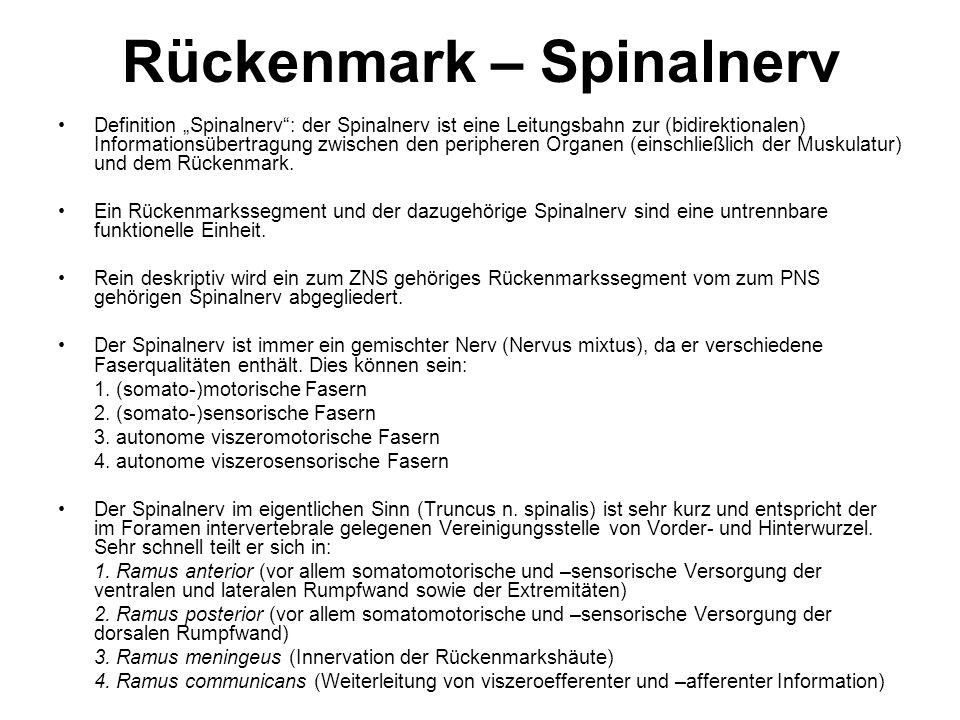 Rückenmark – Spinalnerv Definition Spinalnerv: der Spinalnerv ist eine Leitungsbahn zur (bidirektionalen) Informationsübertragung zwischen den periphe