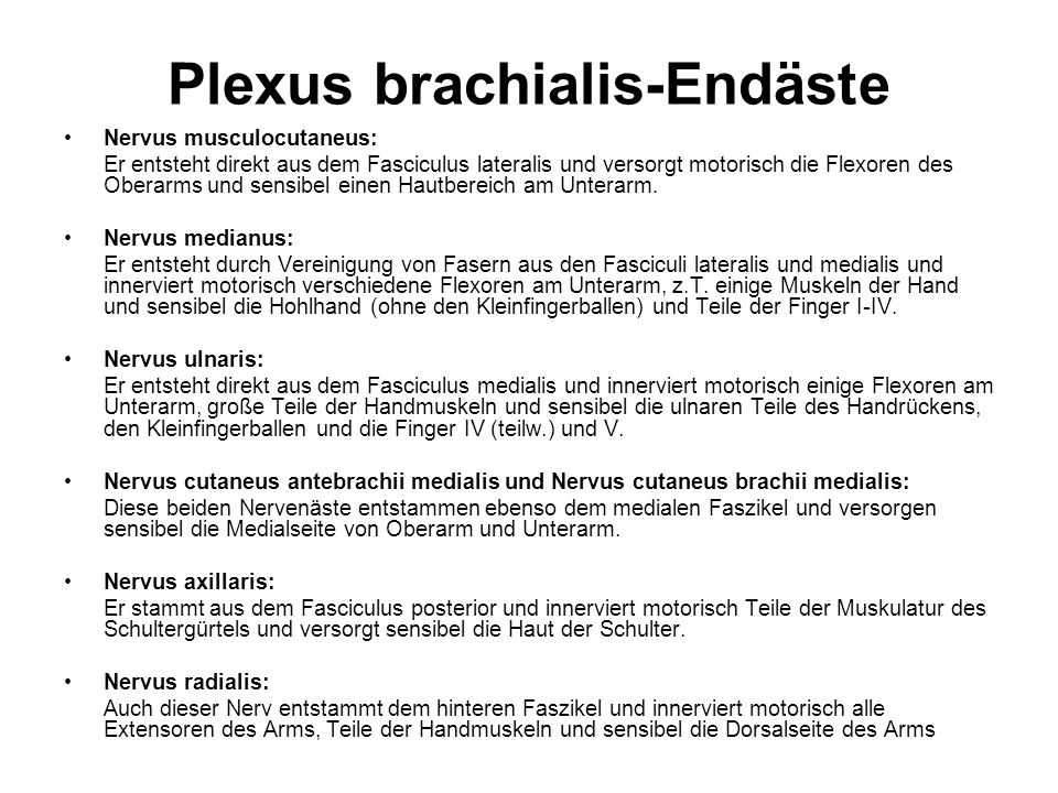 Plexus brachialis-Endäste Nervus musculocutaneus: Er entsteht direkt aus dem Fasciculus lateralis und versorgt motorisch die Flexoren des Oberarms und