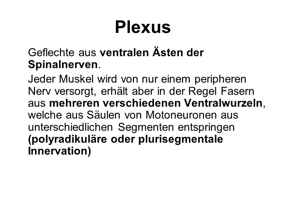 Plexus Somatische Nervenplexus Willkürmotorische und sensible Nervenfasern bilden auf jeder Seite einen: Plexus cervicalis für die Muskulatur und Sensibilität von Hinterkopf und Hals, gebildet aus den Nervenwurzeln C1 bis C4 Plexus brachialis für die Muskulatur und Sensibilität von Schulter und Arm, gebildet aus den Nervenwurzeln C5 bis Th1 Plexus lumbosacralis, den man unterteilen kann in Plexus lumbalis für Hüfte und Bein, gebildet aus den Nervenwurzeln Th12 bis L4 Plexus sacralis gebildet vor allem aus den Nervenwurzeln L5 und S1, mit motorischen und sensiblen Fasern fürs Bein; die meisten Fasern des Plexus sacralis vereinigen sich zum Nervus ischiadicus Plexus pudendus mit vegetativen Nervenfasern für Blase, Geschlechtsorgane und Enddarm, gebildet aus den Nervenwurzeln S2 bis S4 Beim Menschen haben Plexus cervicalis und Plexus brachialis keine Verbindung und werden daher nicht gemeinsam als Plexus cervicobrachialis bezeichnet.
