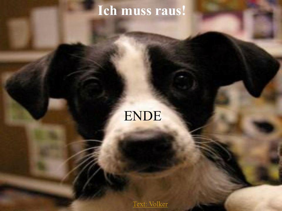 Text: Volker Mensch! Hier spricht Dein Hund: